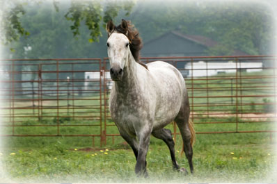 whitesboro-apartments-horses